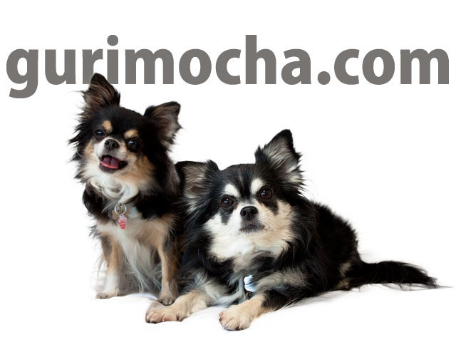 gurimocha.com