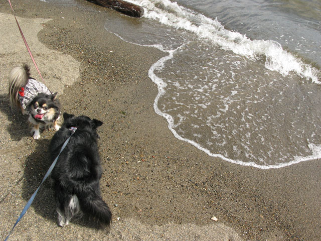砂浜で水遊び