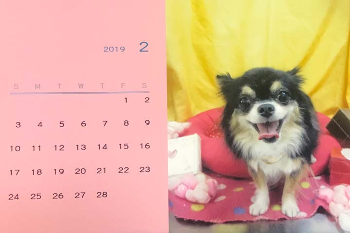 モカカレンダー2019年1月