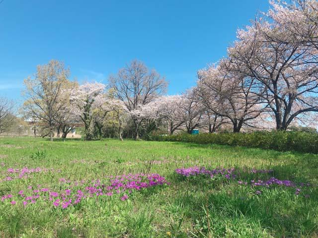 sakurasou05